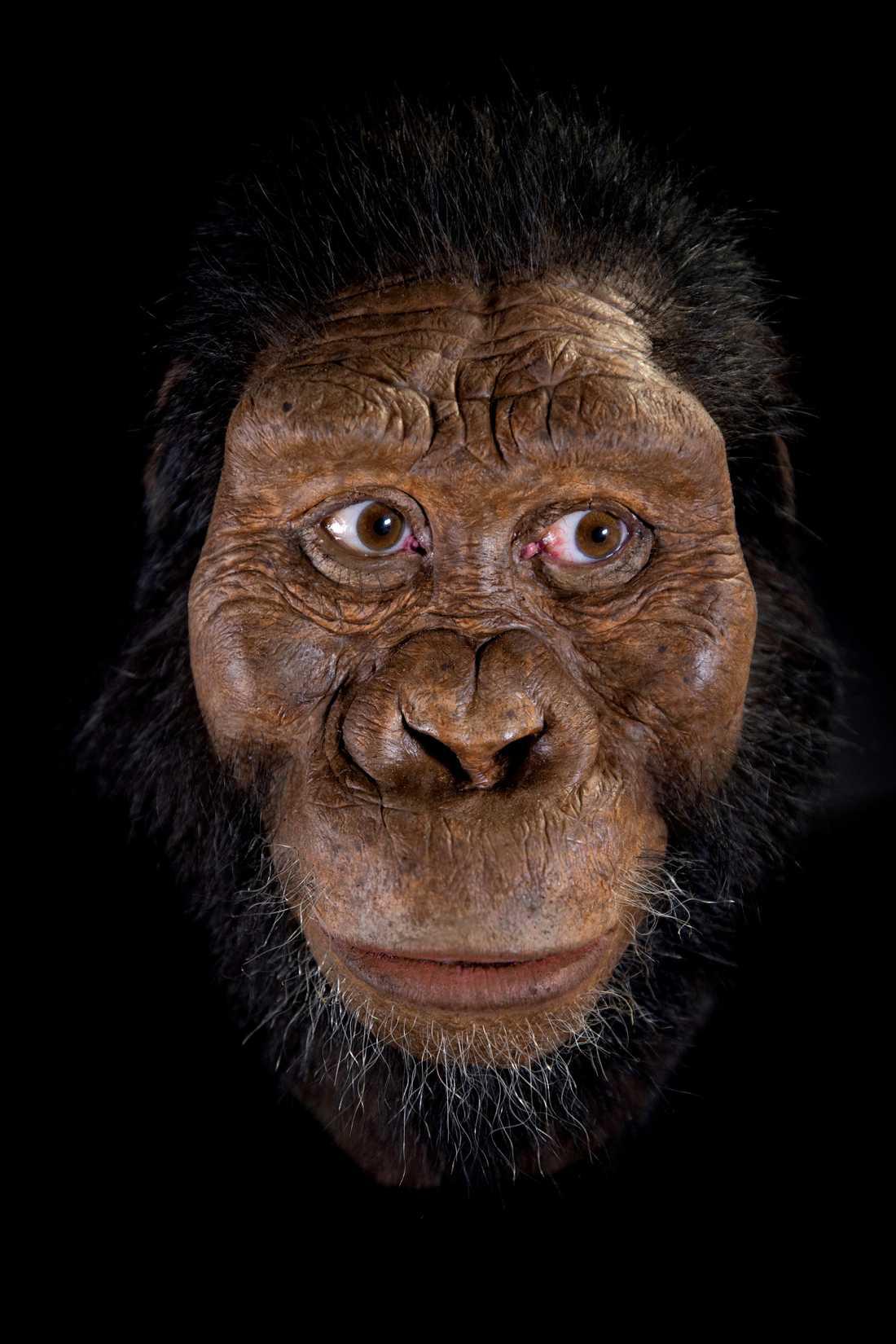 Analyserna visar att arten var betydligt mer primitiv än vad man tidigare trott med ett utskjutande käkparti.