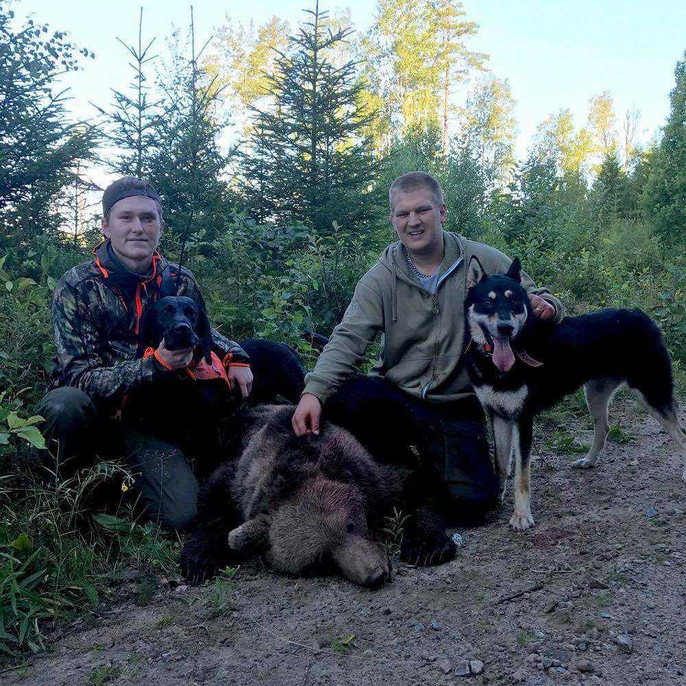 Axel, 18, och Erik, 26, lyckades skjuta den 97 kilo tunga björnhanen.