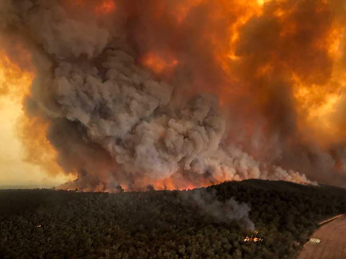 Fem miljoner hektar mark har brunnit sedan bränderna startade i slutet av september.