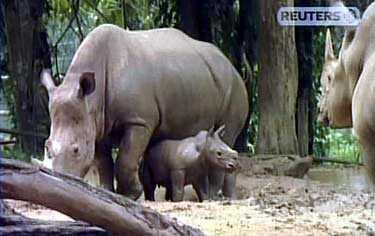 Det senaste tillskottet i djurparken blev en liten hona, som ännu inte fått något namn.
