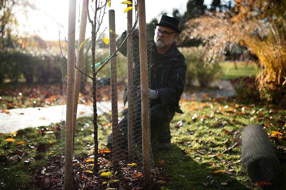 Med rätt utrustning tar det inte mer än tio minuter att skydda – och rädda – det nyplanterade trädet.