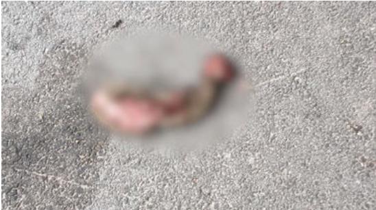 I samma veva som personalen upptäckte skadegörelsen hittades en lemlästad igelkott på skolgården.