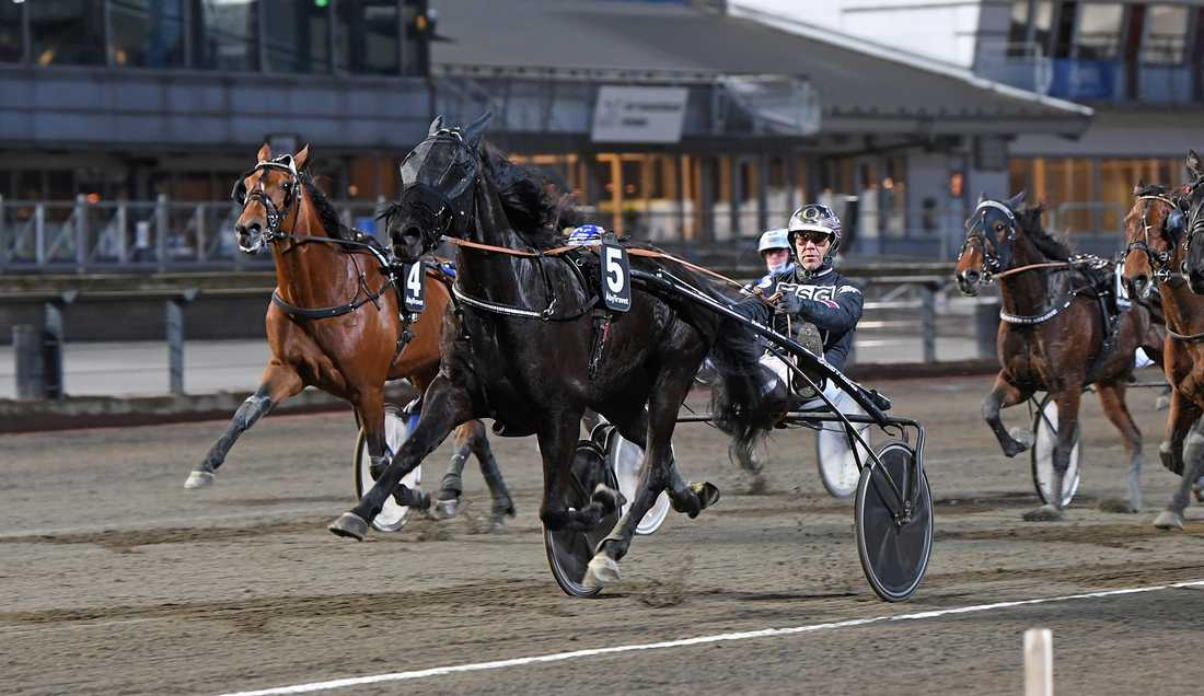 Wingait Henke med Stefan Persson i sulkyn spikas på V75.