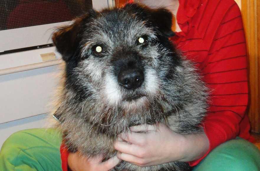 Bengts hund Gorim.