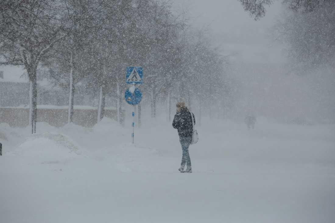 Vintern i Sverige väntas bli kallare än normalt.