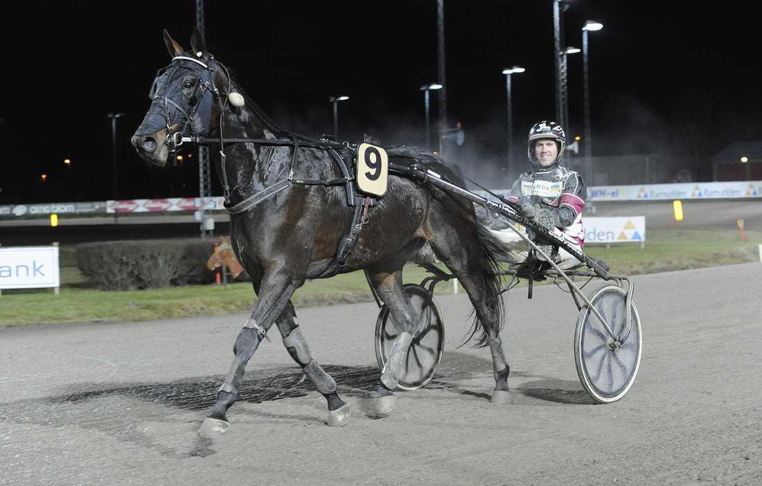 Global Tailwind har fem raka segrar. På lördag gör hästen debut på V75. Blir det sjätte raka segern?