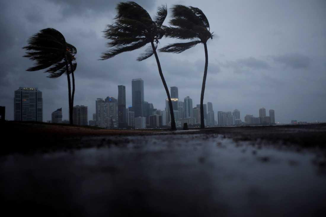Miami väntar in Irma.