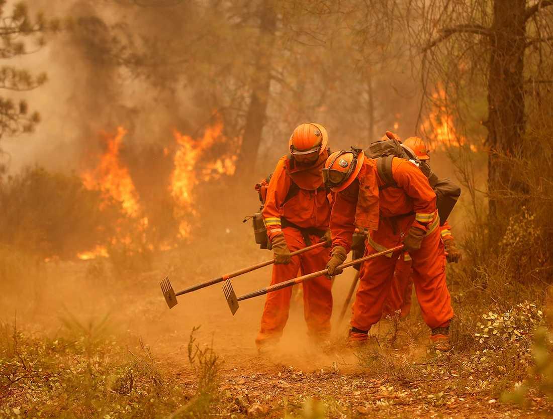 Amerikanska fångar arbetar med att begränsa spridningen av en skogsbrand i Kalifornien.