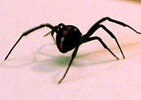 Spindlar.
