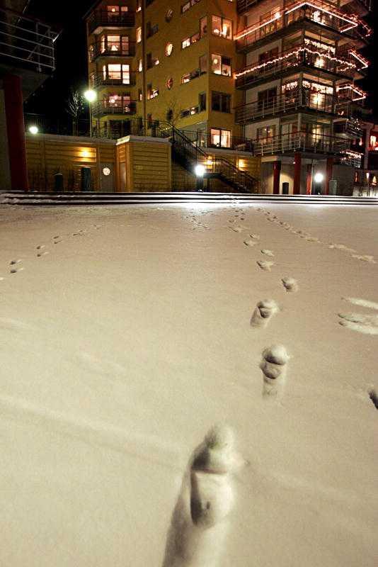 HADE SMÅ FÖTTER Fotspåren i snön efter överfallet på Anna blev ett av bevisen mot Niklas Lindgren. Foto