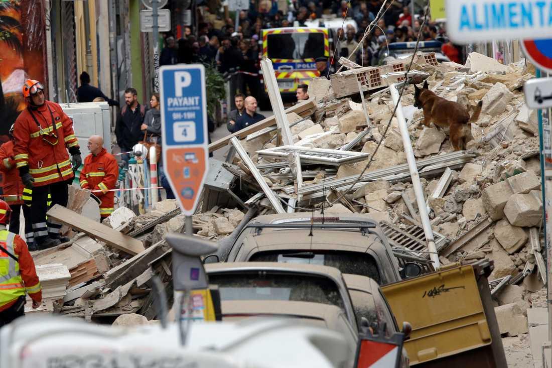 Hundar söker efter överlevande i rasmassorna efter de kollapsade byggnaderna i Marseille i södra Frankrike.