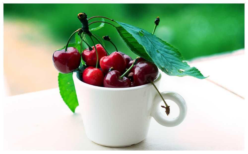 Härligt röda, nyplockad körsbär.