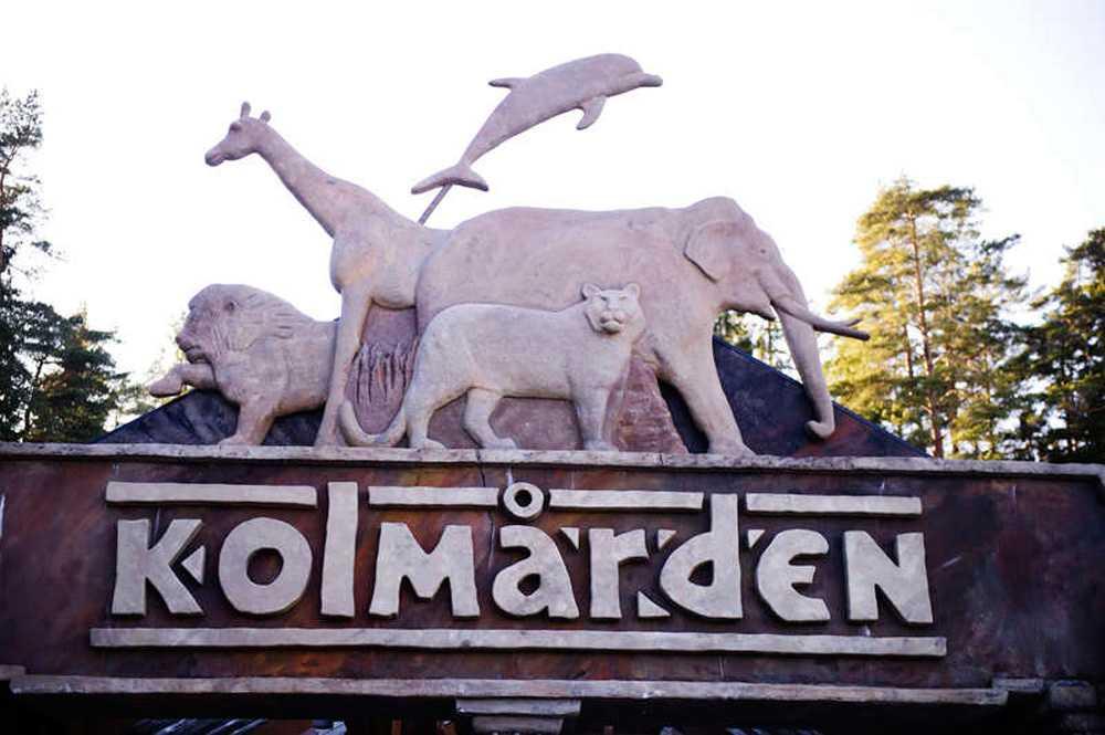 Den 15-åriga flickan blev biten av en varg på Kolmårdens djurpark.