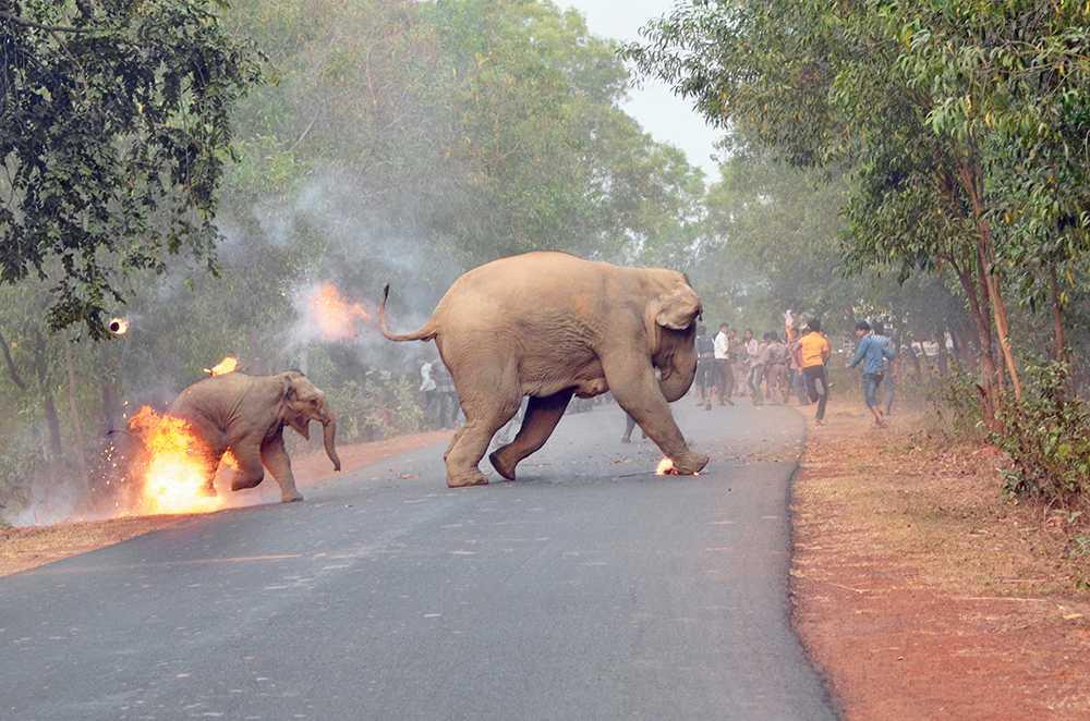 Brinnande elefant flyr från folkmassorna.
