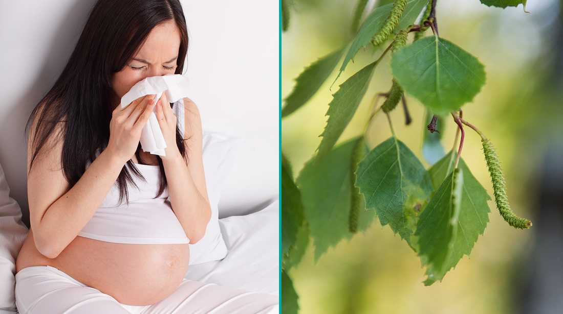 Har du pollenallergi och är gravid? Då går det bra att äta medicin, enligt läkaren.