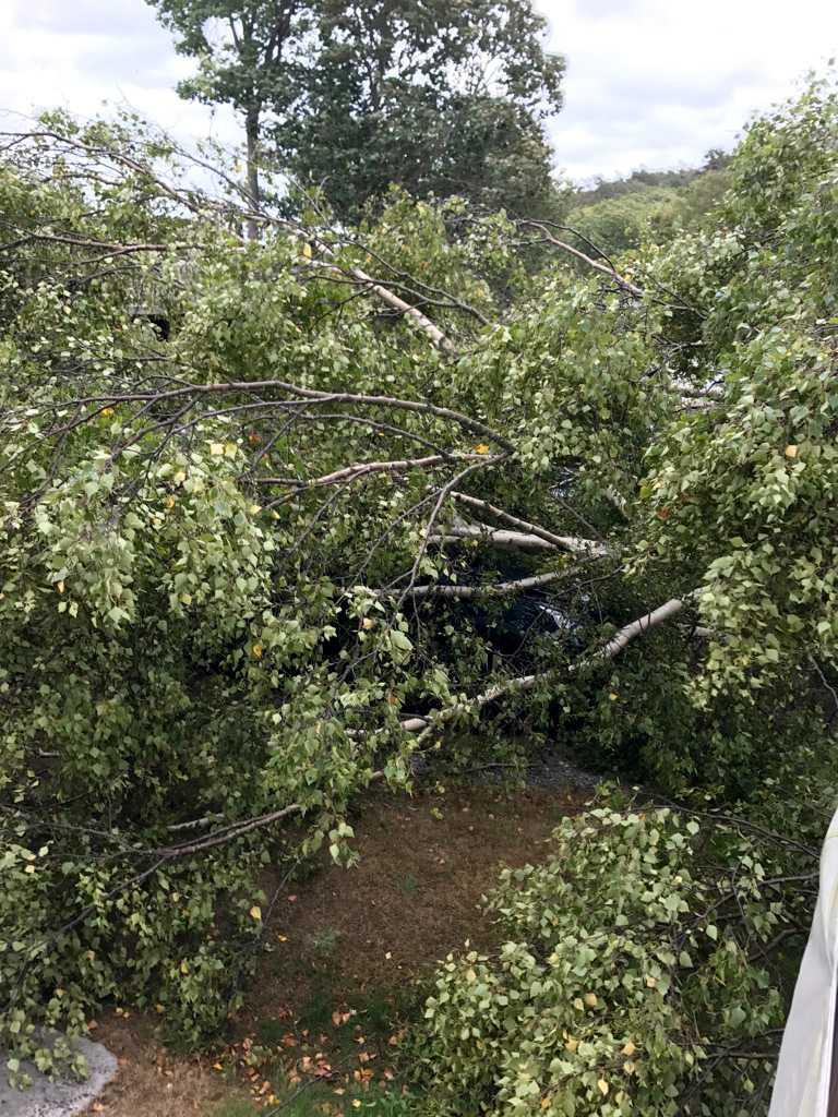Vid Marsstrands camping rev stormen ner ett träd över Svenne Markles, 62, bil.
