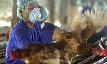 Fågelinfluensan har nu kommit till Europa och EU förbereder sig genom krismöten.