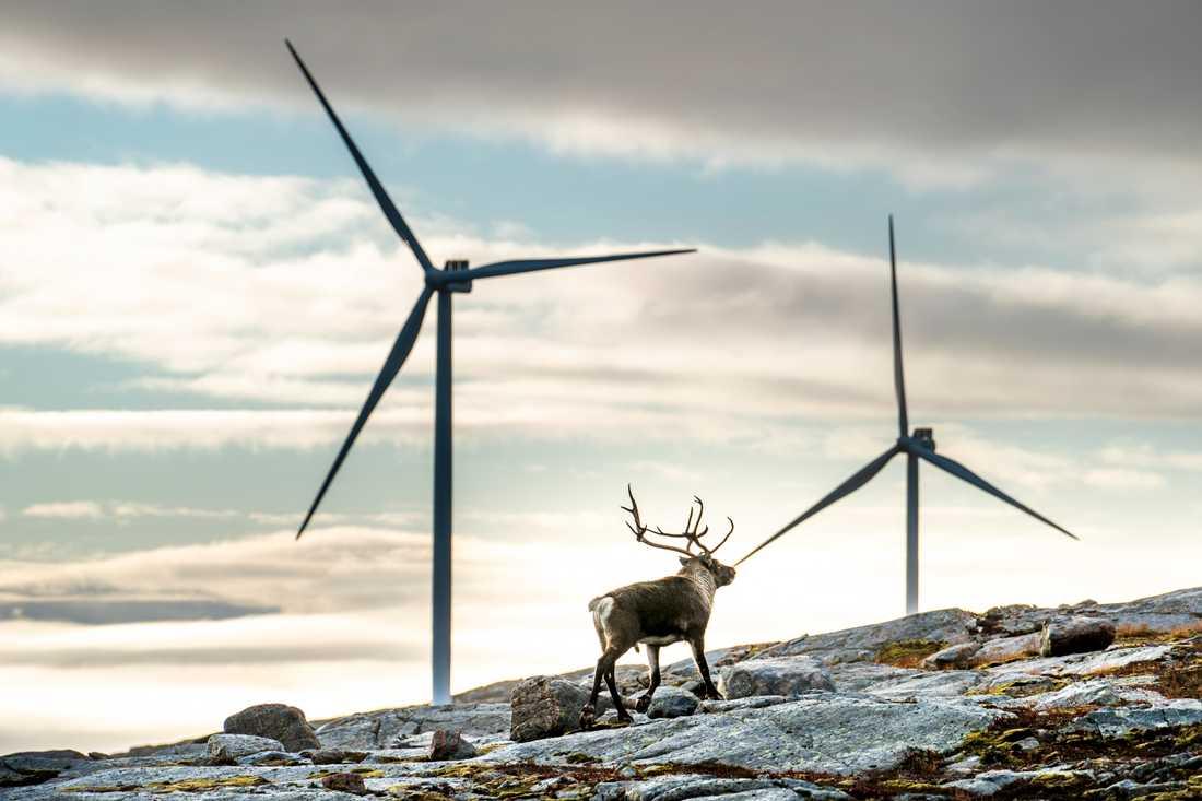 Mycket mer vindkraft väntas i norr, något som lockar elslukande industri. Genrebild.
