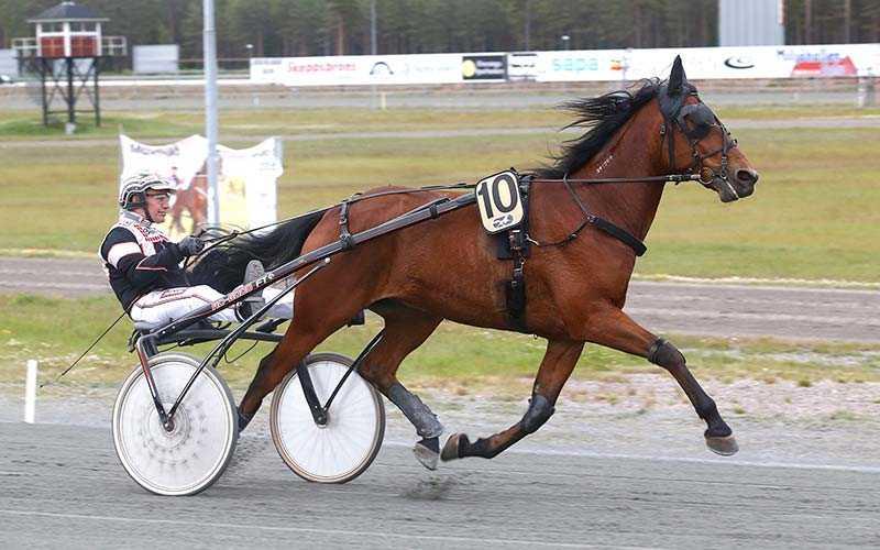 Delicious Brown kan i Kalmar på lördag ge travtränaren Peter U Andersson den så efterlängtade V75-triumfen
