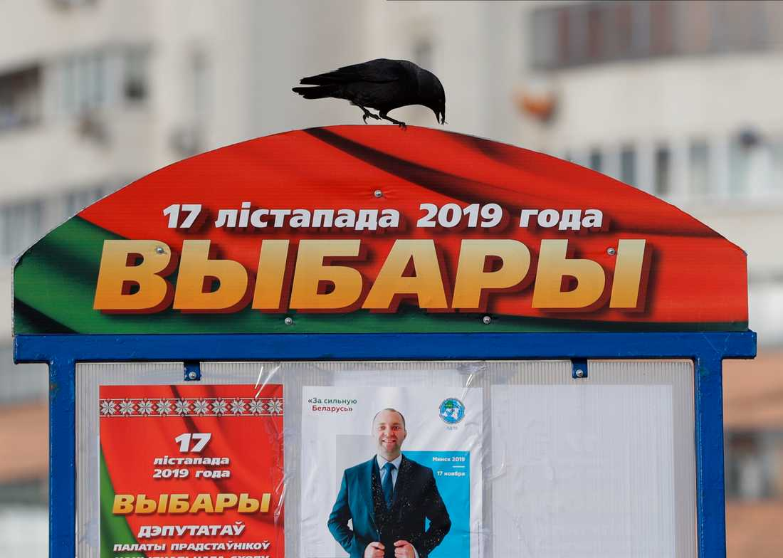 Flera organisationer varnar för att valfusk har förekommit i Vitryssland.
