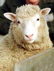 DOLLY Vem minns inte världen första klonade får? Men att sätta tänderna i henne?