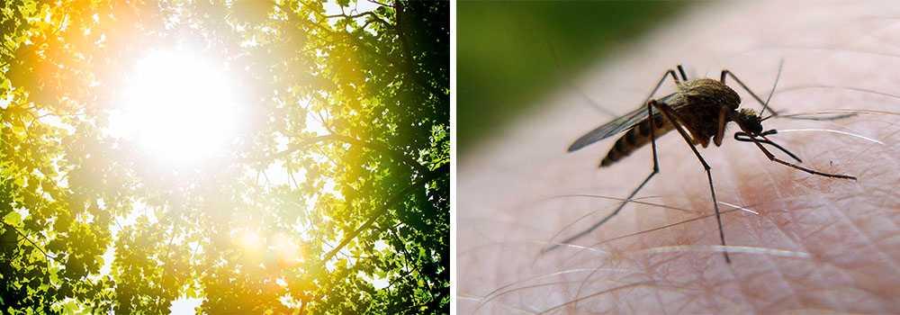 Torkan kan slå håt mot den blodsugande insekten.