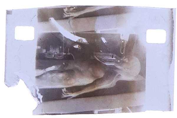 Il prezzo richiesto per il negativo della presunta autopsia della creatura aliena è di 8 milioni di corone presso la società di aste Raribles.