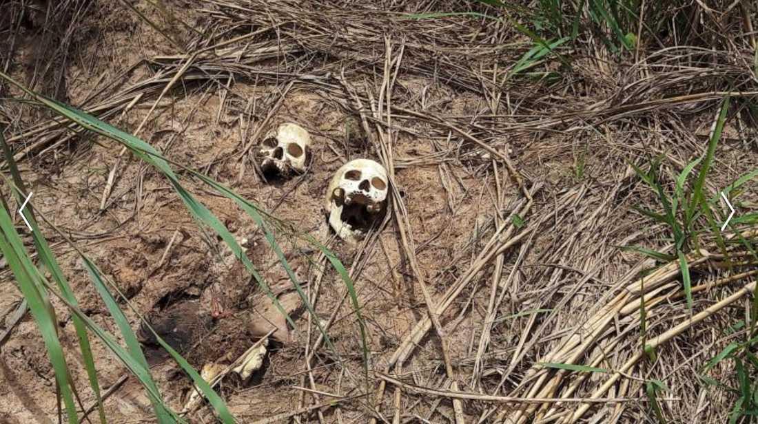 Arkivbild: Skelett från en massgrav i Kongo