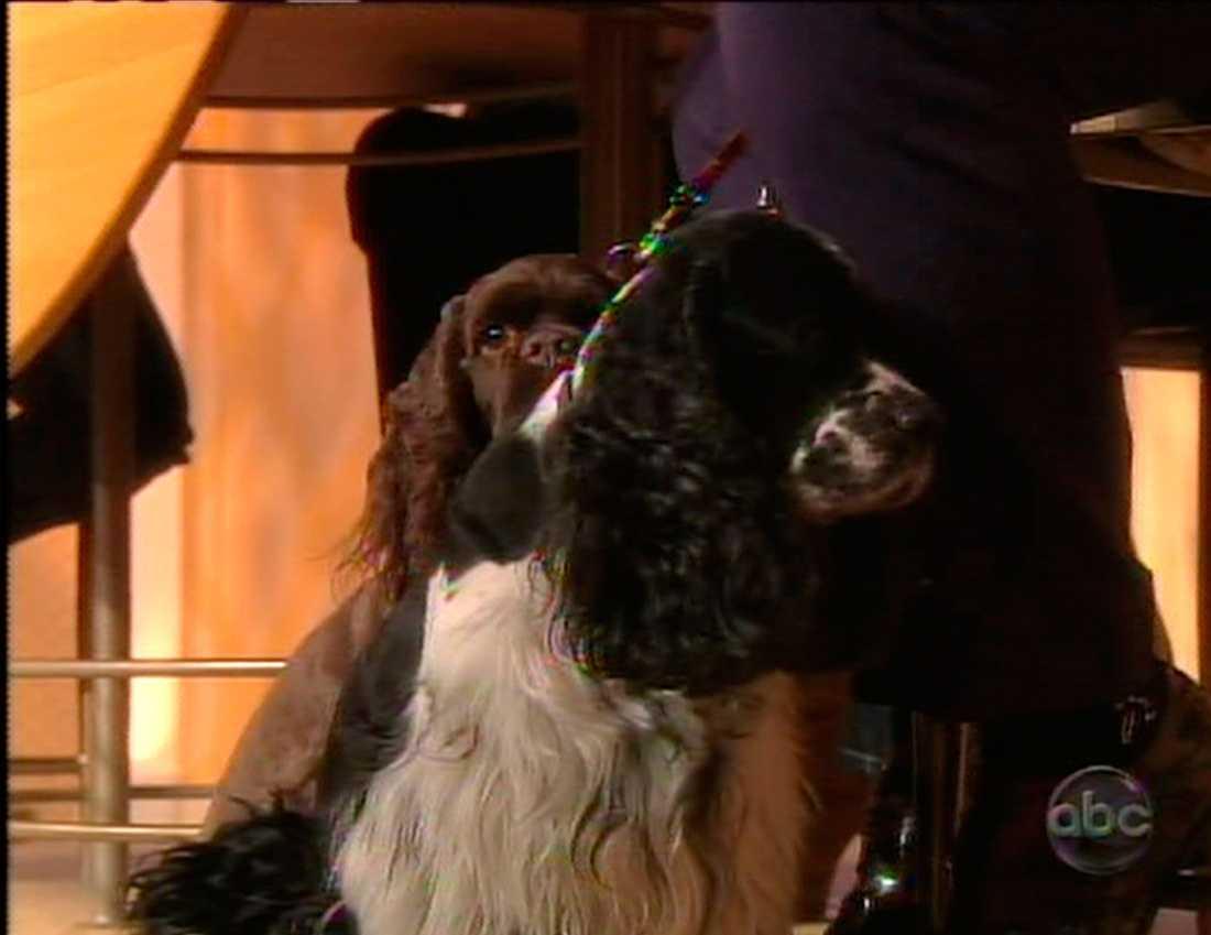 Hunden Arthur.