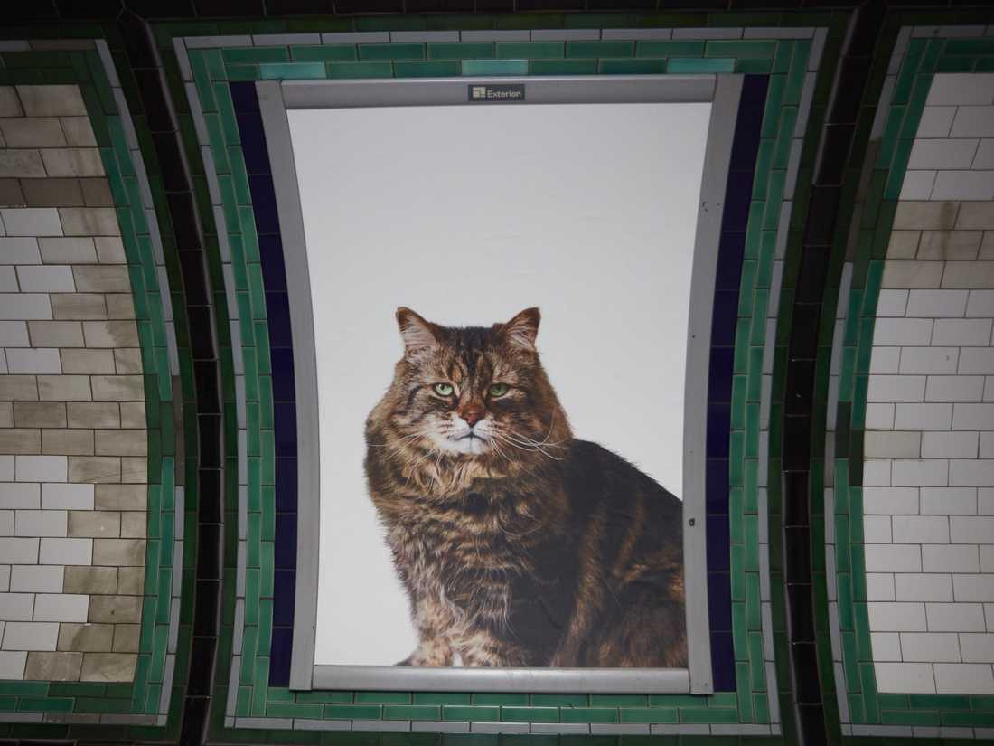 Många av katterna på bilderna kommer från ett lokalt kattstall och behöver ett nytt hem.