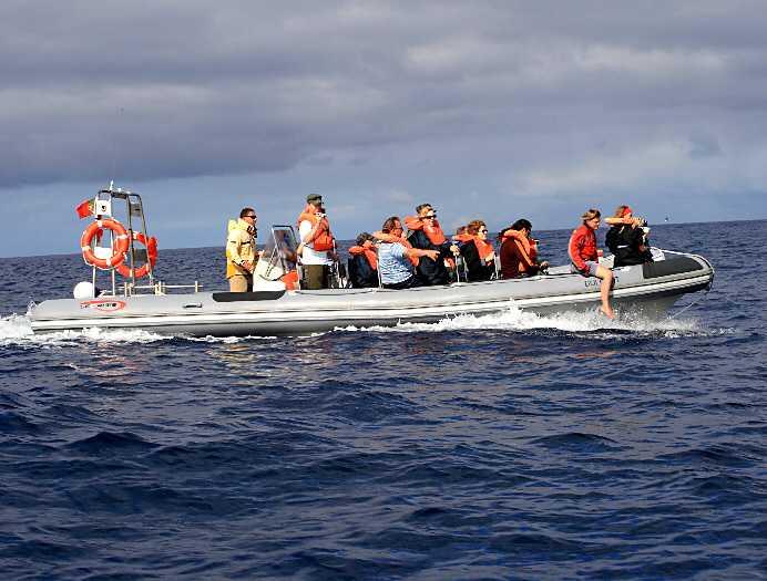 SAFARI TILL HAVS En något skumpig färd rakt ut i de atlantiska vattenmassorna kompenseras snabbt med synen av delfiner inom nästan klappvänligt avstånd. Efter tre spännande timmar utan val i sikte blev vi dock tvungna att återvända till fastlandet.