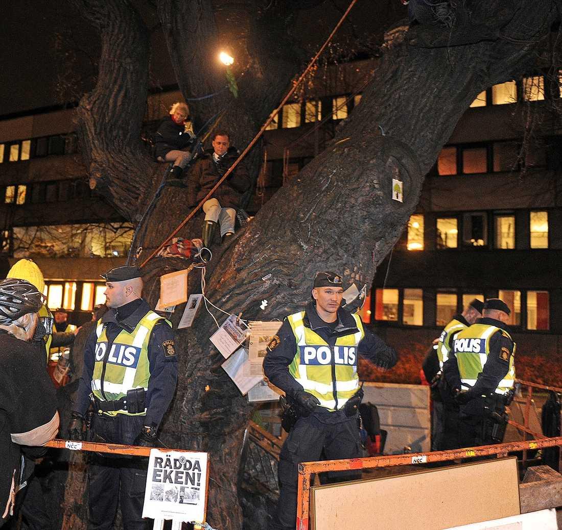 Den månghundraåriga eken på Oxenstiernsgatan, fälldes trots protester från allmänheten.