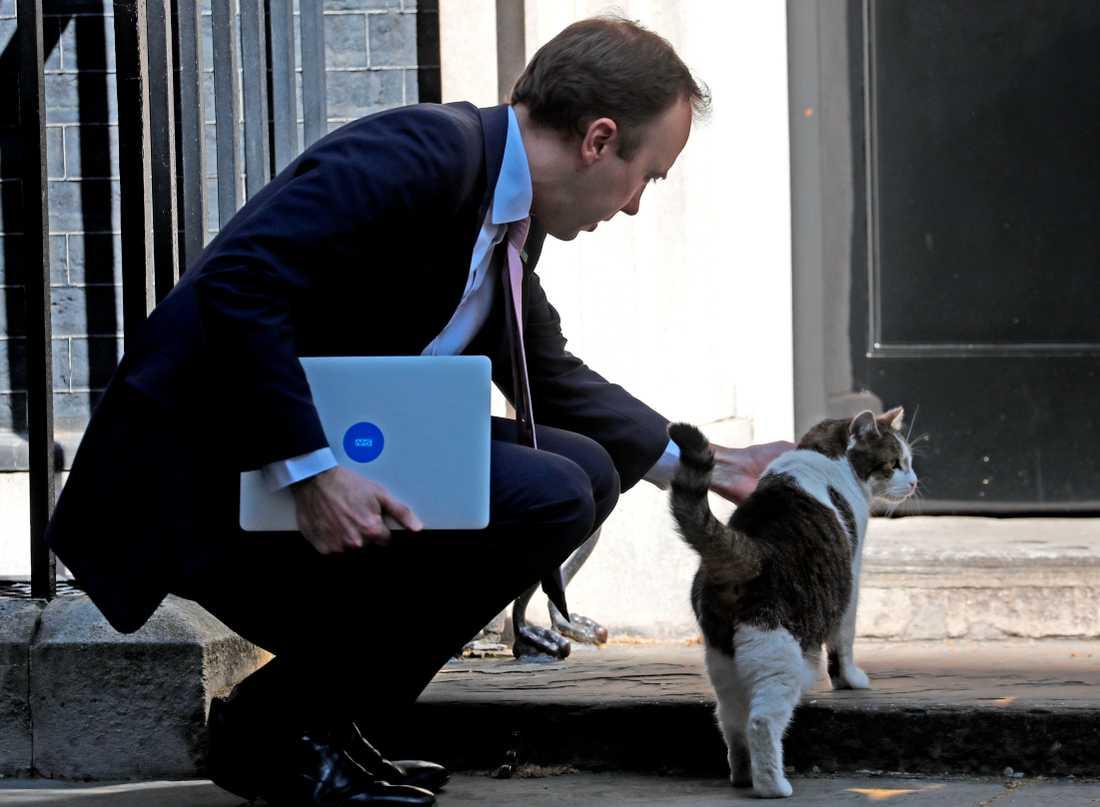 Larry, en av de katter som kvarstår i det brittiska rikets tjänst, utanför premiärministerns bostad 10 Downing street.