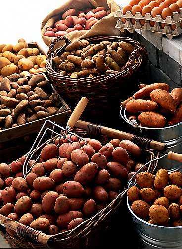Rå knöl. Rå potatis av god kvalitet är inte farligt.