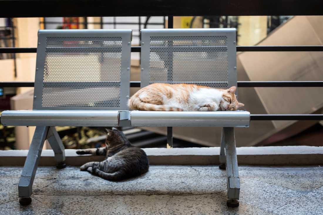 Drygt tusen personer har skrivit på en namninsamling för att låta katten Honey vara kvar som sjuksköterska. Katterna på bilden hänger inte ihop med artikeln. Arkivbild.