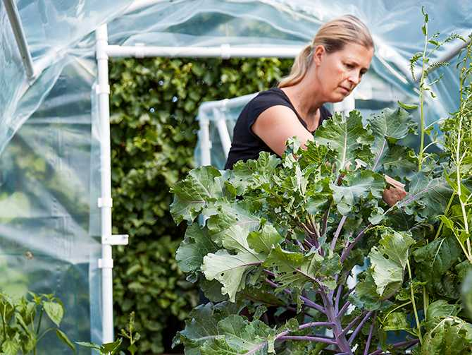 Gabriella Ekström på Färingsö utanför Stockholm är en av många som vill bli självförsörjande på grönsöker.