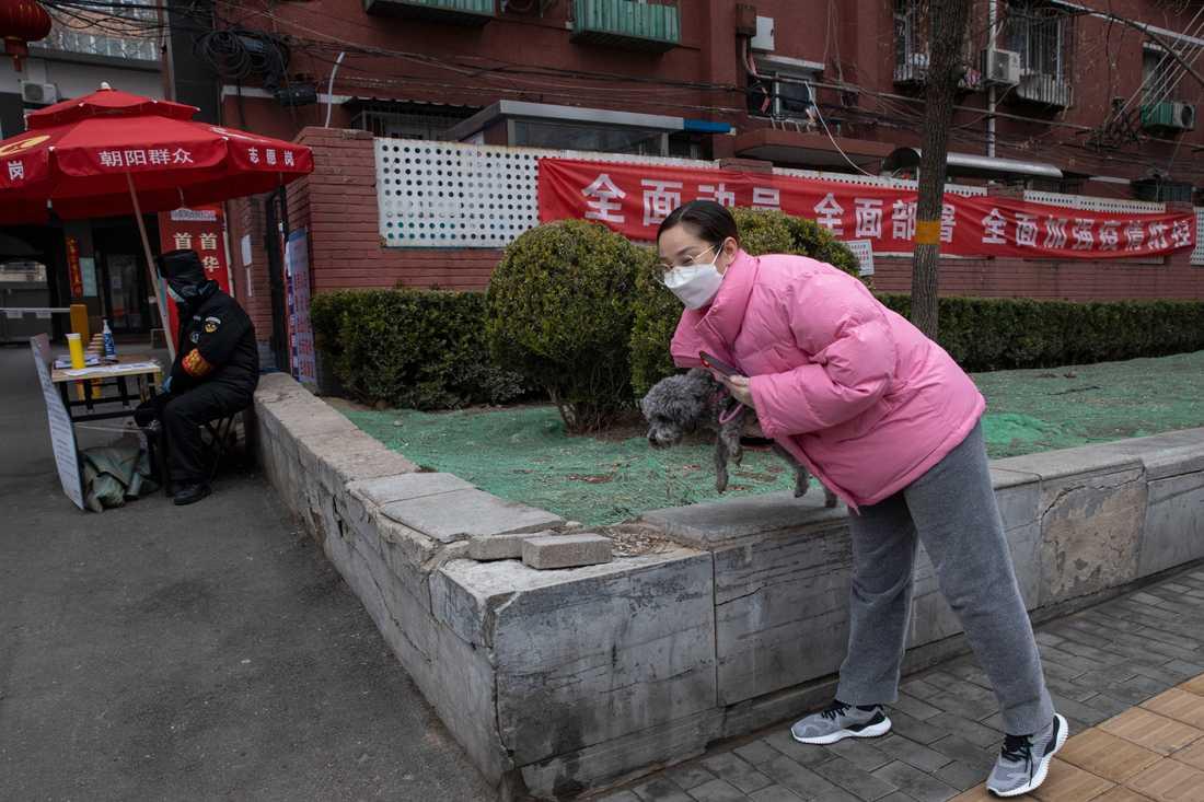 En hund på promenad i Peking. Andra husdjur sitter fast i öde lägenheter i Kina. Arkivbild.