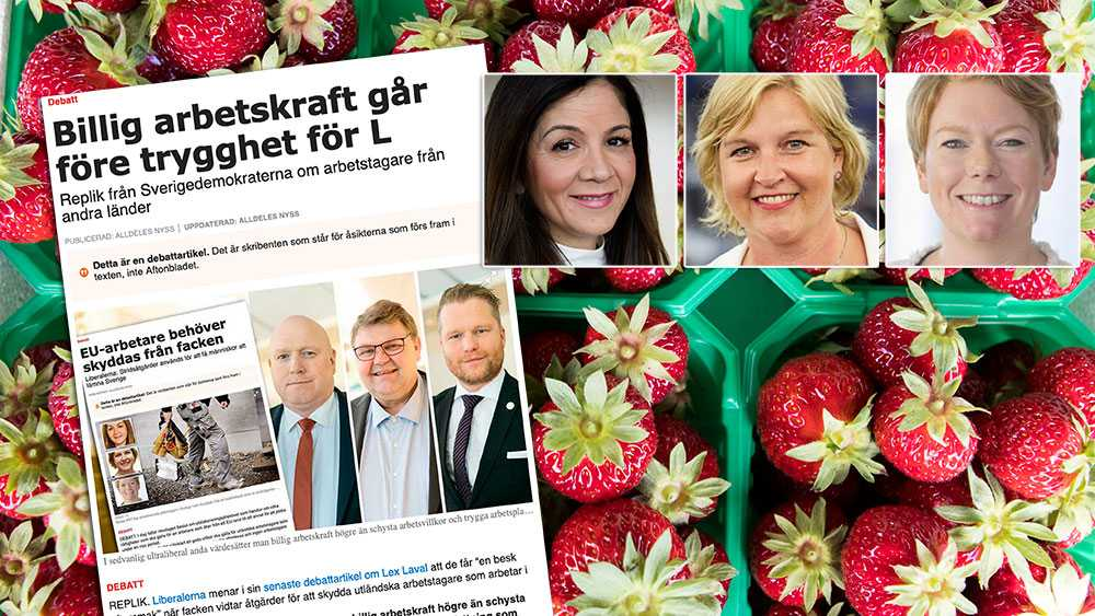 SD spelar på en nostalgisk bild av Sverige, men bortser från att midsommarbordets delikatesser har kunnat skördas tack vare utländsk arbetskraft. Att försvåra för denna arbetskraft att komma och bidra till Sverige i framtiden vore att skjuta oss själva i foten, skriver Liberalerna i en replik till Sverigedemokraterna.