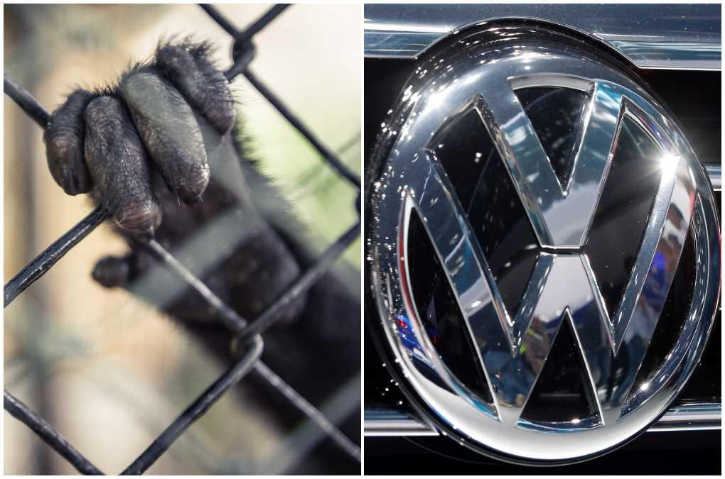 Chefslobbyisten Thomas Steg stängs av från Volkswagen efter skandalen kring utsläppstester på aport.