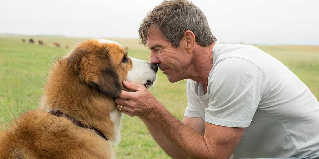 "Scen ur filmen ""A dogs purpose""."