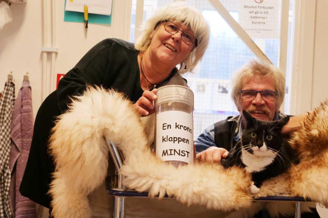 Eftersom så många klappade Sören föddes idén att ta en krona per klapp till hemlösa katter.