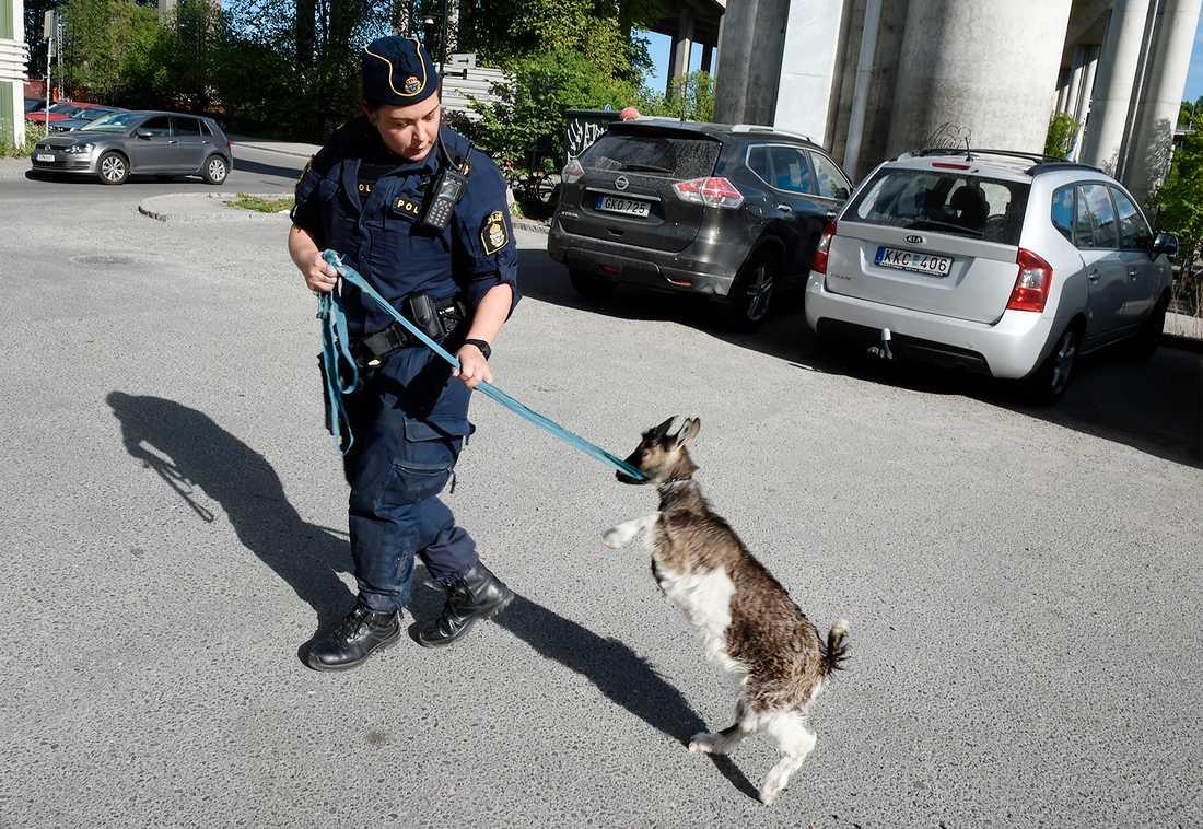 Polisen räddade geten ur en varm bil som stod parkerad utanför Badmintonstadion vid Skanstullsbron i Stockholm.