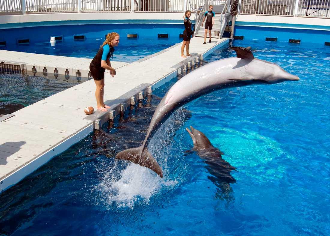 Delfinshower väcker känslor. Arkivbild från Florida.