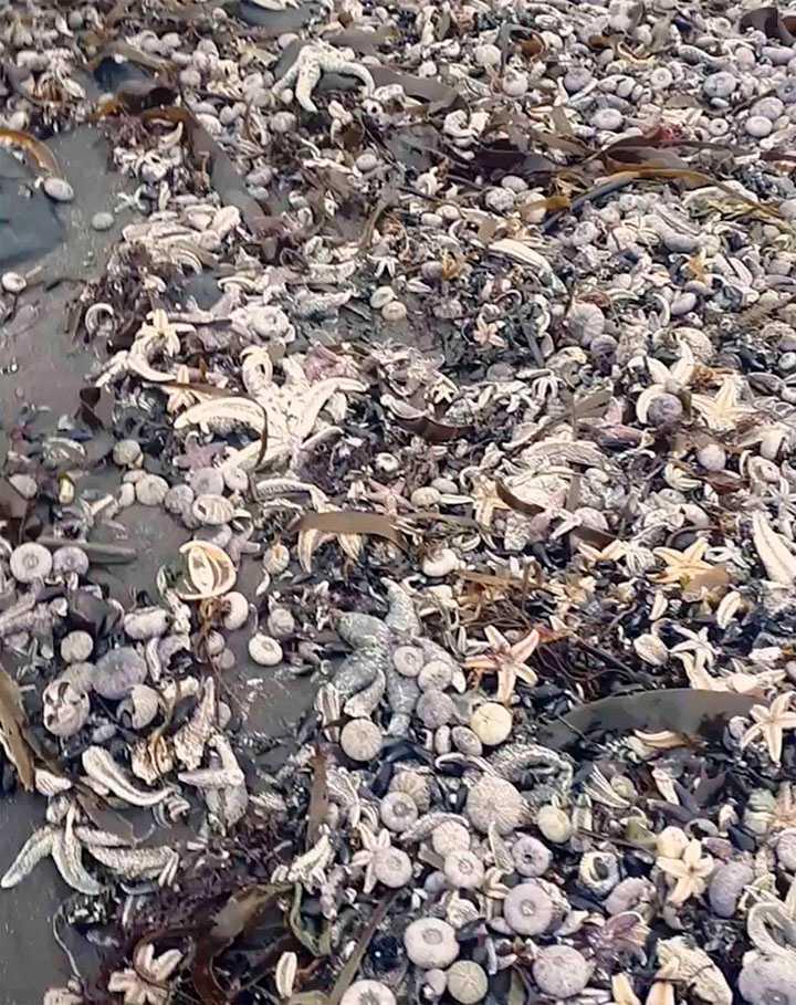 Kristy Rozenbergs bild på döda havsdjur som ligger i drivor på stranden.