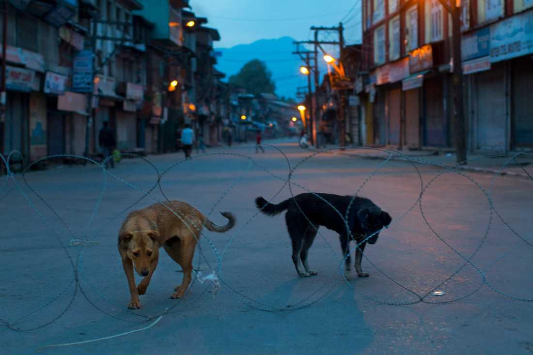 Rabies dödar – undvik hundar på resan. Arkivbild.