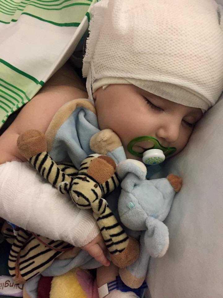Tiger efter en av många operationer.