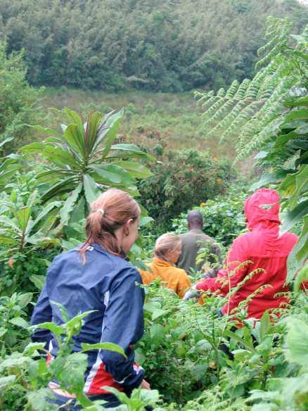 Närmare och närmare gorillorna. Guiden Pascal vet var han ska hitta dem.