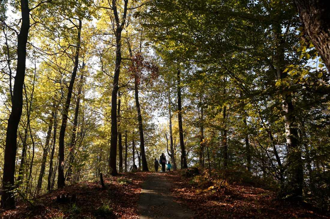 Att vistas i naturen är bra för hälsan. Arkivbild.