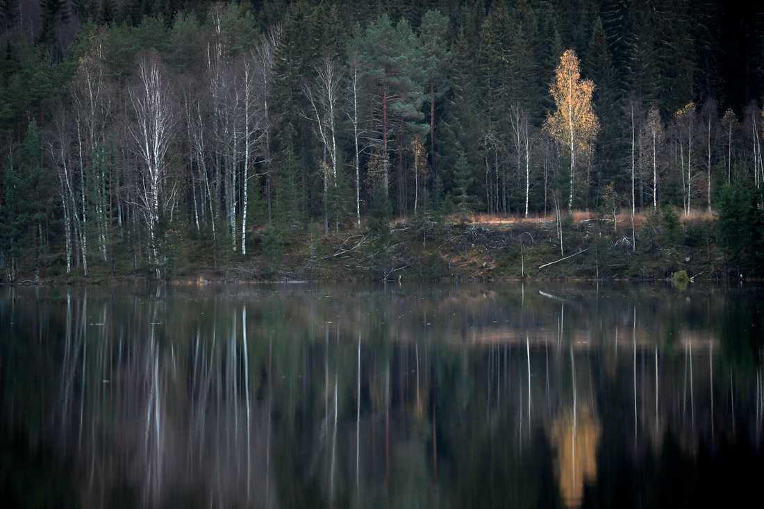 Varken skogsägare eller miljörörelse är riktigt nöjd med Skogsutredningens förslag. Arkivbild.
