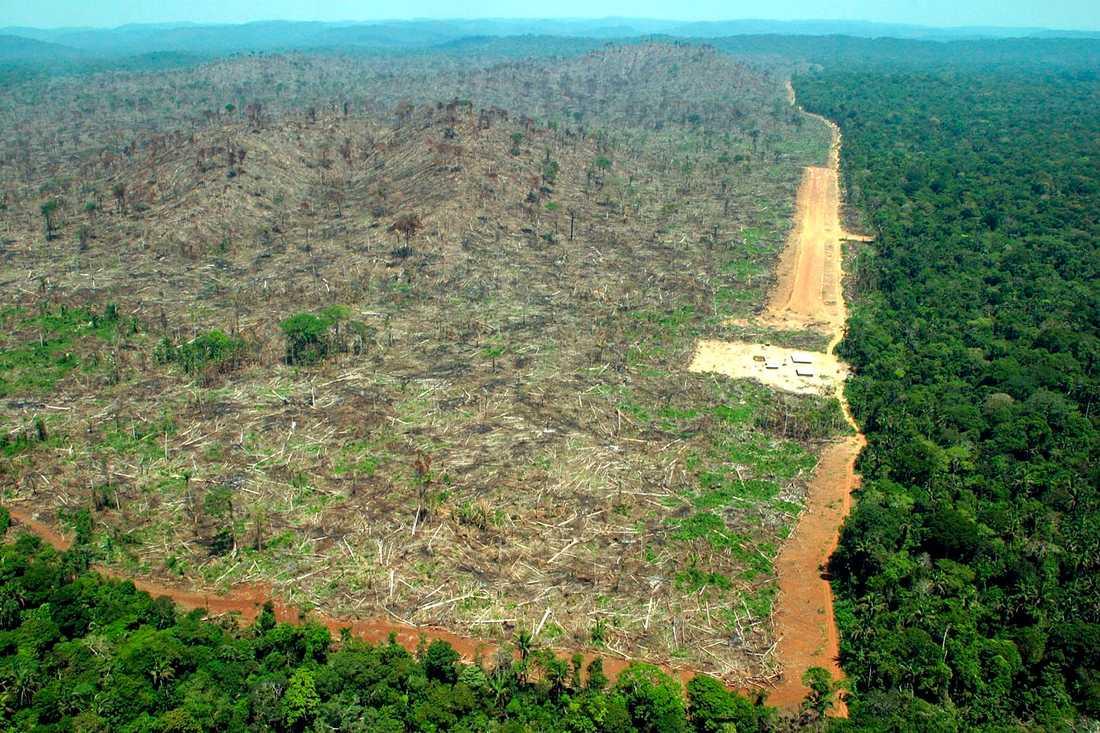 Skövlingen av Amazonas var under maj månad den högsta under en majmånad sedan man började övervaka skövlingen. Arkivbild.